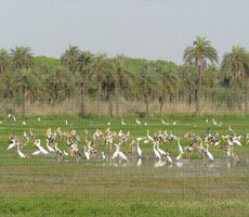 Surajpur Wetland - Natural Forest